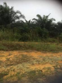 8 Acres Oil Palm / Tanah Kelapa Sawit 8 Ekar - Pulada, Ulu Tiram