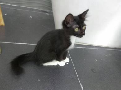 Domestic cat x 3
