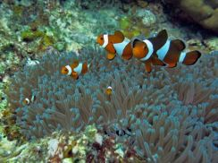 AMI Travel | 4D3N Redang Open Water Course