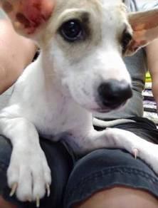 Female puppy {ADOPTION}