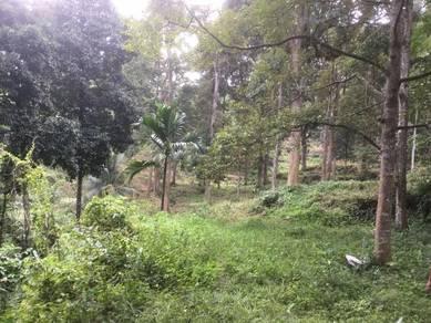 Durian farm - Bukit Mertajam