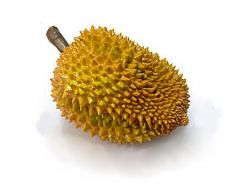 Simulation Durian King Fruit toy model 32cm