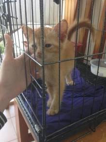 Kitten (adopt)