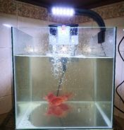 Small Aquarium for small fishes