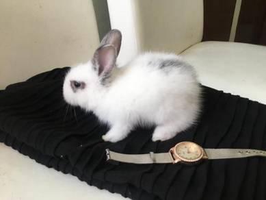 Rabbit / arnab - pure teddy bear