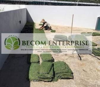 Pakej grass rumput halaman hiasan landskap