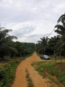 8 Acres Agricultural Land For Rent