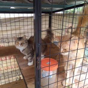 Kucing Untuk Dilepaskan