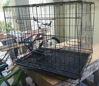 Cat cage pre love 2' x 1.5