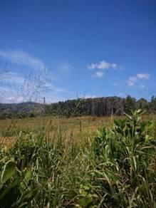 NT Land 8.92 ekar kg. Lotong Kudat