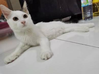 Kucing cat