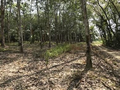 4 Acres, rubber or palm oil land, Sungai Ruan, 2nd lot, durian