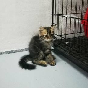 Kitten baik punya