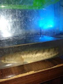 Ikan untuk dijual