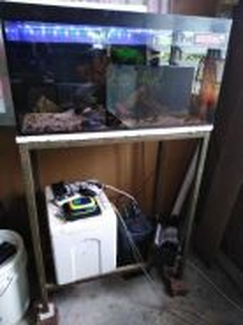 Full set 2.5 kaki akuarium