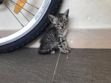 4 kitten anak kucing adpot cute grey brown white
