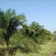 Land for sale Kaiduan Papar