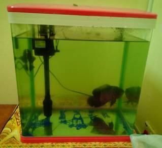 Aquarium dan ikan oscar