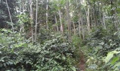 Old Trees Rubber Land 5.5 Acres Freehold Non Bumi Jasin
