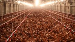 Chicken Poultry Farm Land for Sale (Johor)