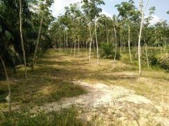 Land for Sale (0.82 hectare / 2.026264 acre)
