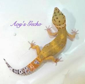 Hypo Emerine Carrot Tail Leopard Gecko