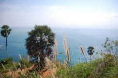 AMI Travel   3D2N Discover the Amazing of Phuket