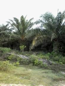 Plantation land at Pekan, Pahang