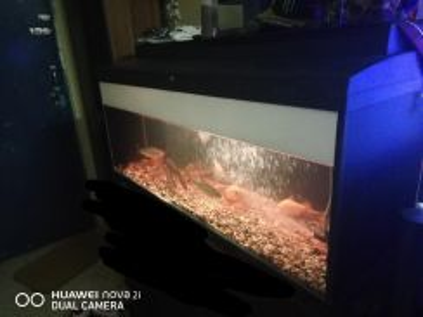Aquarium 4 kaki fullset