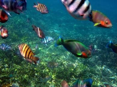 AMI Travel   3D2N Snorkeling at Tenggol Island