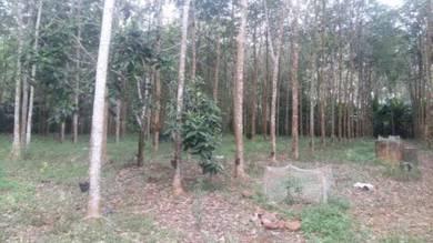 Tanah Getah Muda Kg Sermin Segamat