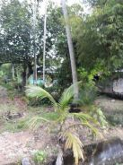 Land at Teluk Kumbar flat Land , Genuine Buyer