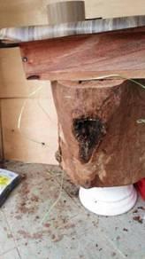 Menternak Lebah Kelulut tanpa sengat