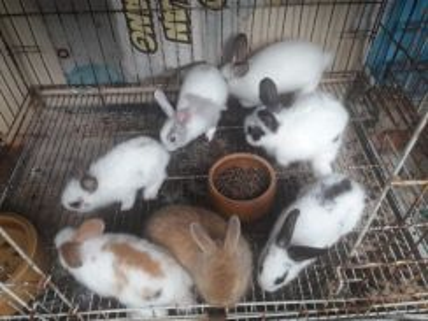Arnab rabbit mix