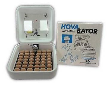 Inkubator pengeraman telur angsa / egg incubator