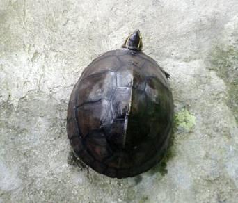Tortoises kura kura turtles