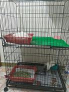Guinea Pigs for experienced and loving family