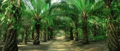 Oil Palm Plantation for Sale at Durian Sebatang Perak