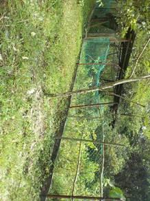 Tanah bekas dusun Alor Gajah