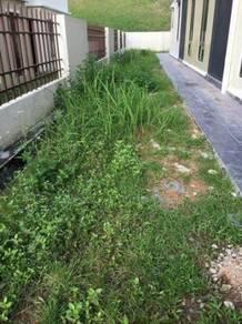 Tanam Rumput karpet Murah