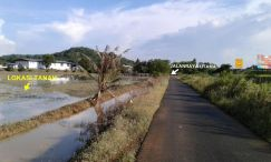 Tanah Sawah 45005 Kp (1 Ekar) Freehold, Jln Kelubi, BandarJitra