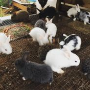 Arnab/rabbit kacuk yang comel