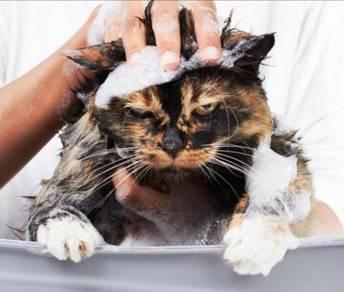 Dermcare malaseb shampoo 01
