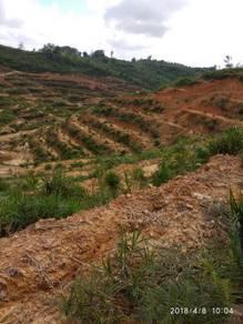 Native agriculture land kuala segan Bintulu