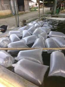 Benih Ikan Air Tawar