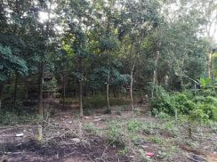 Road Frontage Rubber Land for Sale