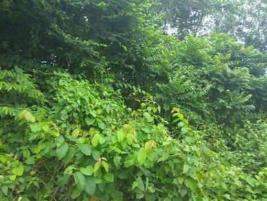 110 Acres Land At Port Dickson, Mukim Pasir Panjang, Negeri Sembilan