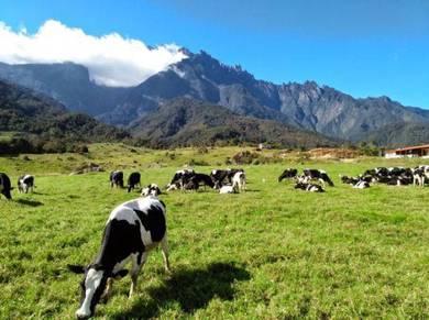 Day Trip To Kundasang Ranau Sabah