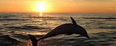 AMI Travel | 4D3N Wonderful Bali Dolphin