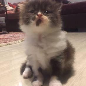 New born mix colour cat